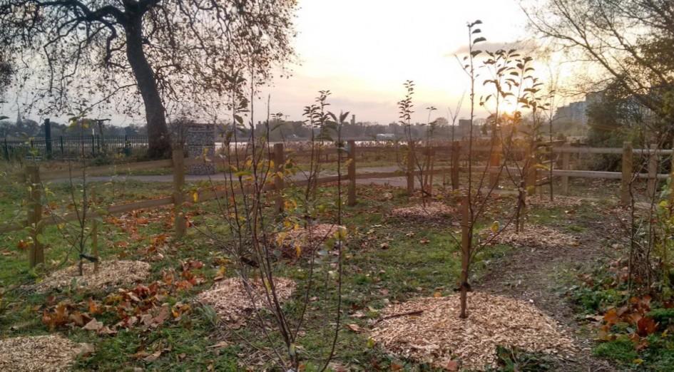 London Wildlife Trust Woodland Wetlands 1 (1)