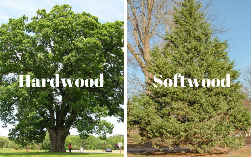 Hardwood and Softwood