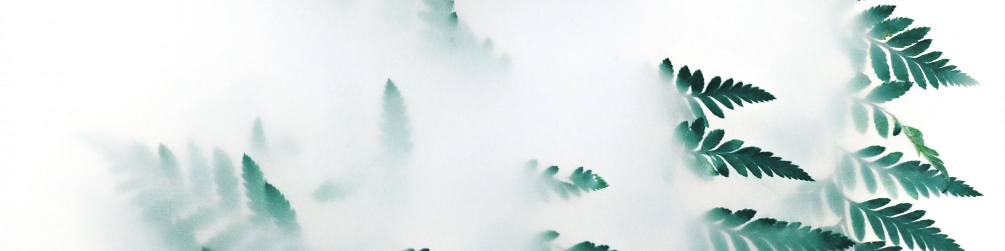 blur-bright-close-up-1405773