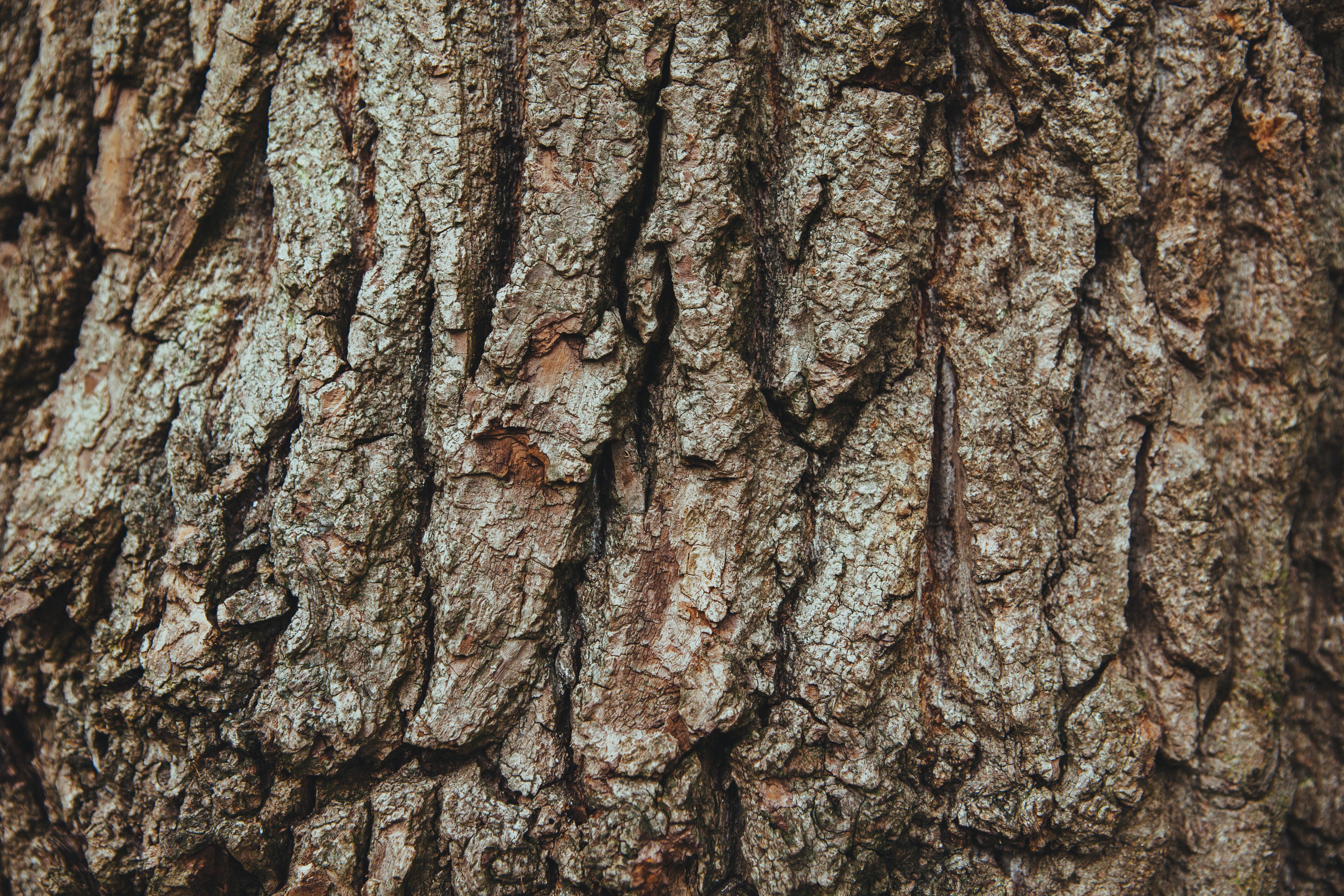 bark-english-oak-french-oak-1761