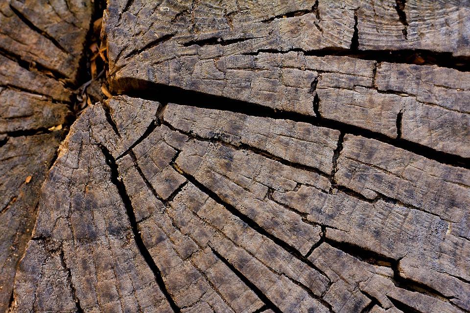 Bark Nature Pattern Dry Rough Textile Texture