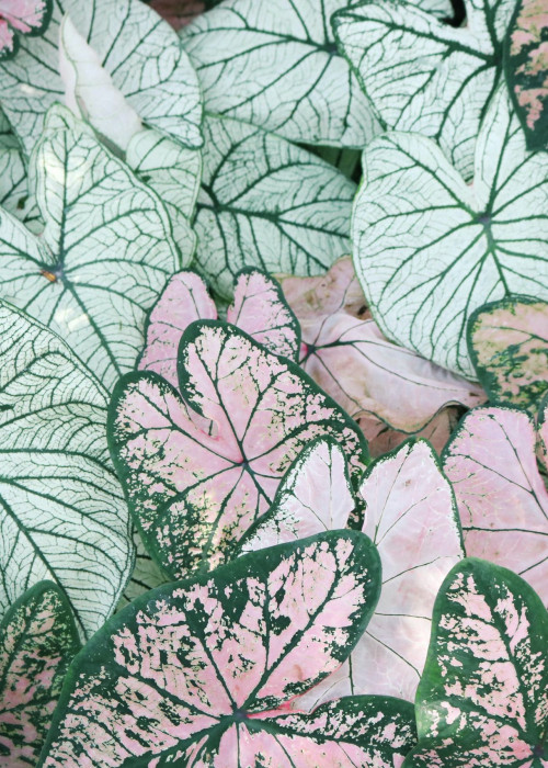 photo-of-leaves-1382393 (1)