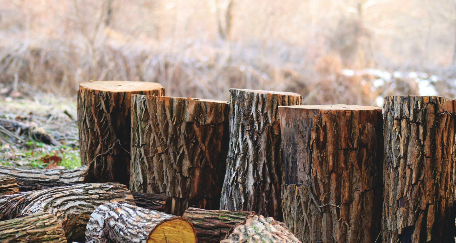 Wood Flooring Sustainability and Certification